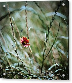 The Lonely Flower Acrylic Print by Linda Unger