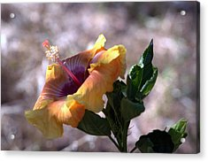 The Lonely Hibiscus Acrylic Print