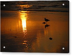 Acrylic Print featuring the photograph The Lonely Seagull by Susan D Moody
