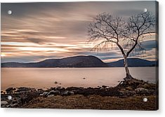 Acrylic Print featuring the photograph The Lonely Tree by Anthony Fields