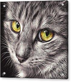 The Look Acrylic Print by Elena Kolotusha