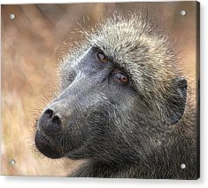 Acrylic Print featuring the photograph The Look by Kim Andelkovic