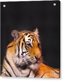 The Look Acrylic Print by Nur Roy