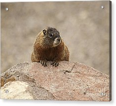 The Lookout Acrylic Print by Bob Dowling