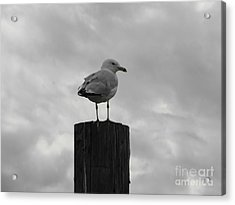The Lookout Acrylic Print by Michael Krek