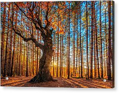 The Lord Of The Trees Acrylic Print