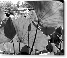 The Lotus Pond Acrylic Print by Larry Knipfing
