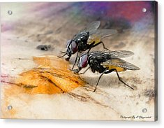 The Love Of Honey 01 Acrylic Print by Kevin Chippindall