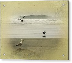 The Love Triangle Acrylic Print by Diane Schuster