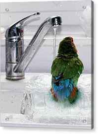 Acrylic Print featuring the photograph The Lovebird's Shower by Terri Waters