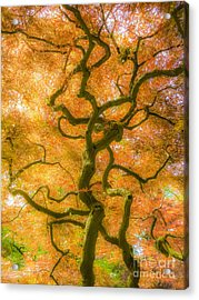 The Magic Forest-15 Acrylic Print
