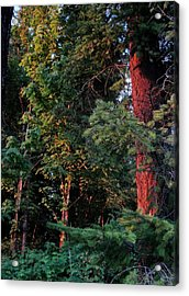 Acrylic Print featuring the photograph The Magic Hour by Natalie Ortiz