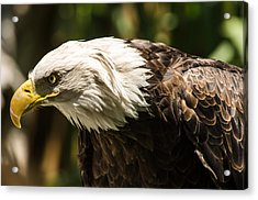 Acrylic Print featuring the photograph The Majestic American Bald Eagle by Yeates Photography