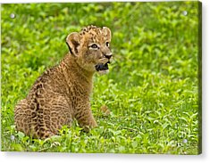 The Markings Of Youth Acrylic Print by Ashley Vincent