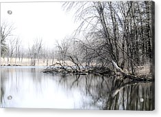 The Marsh Acrylic Print by Julie Palencia