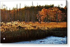 Acrylic Print featuring the photograph The Marsh by Paul Noble