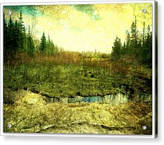 The Marshland  Acrylic Print by Dianne  Lacourciere