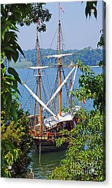 The Maryland Dove Acrylic Print