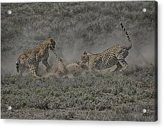 Acrylic Print featuring the photograph The Mating Game 2 by Gary Hall