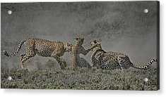 Acrylic Print featuring the photograph The Mating Game by Gary Hall
