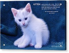 The Meaning Of A Kitten Acrylic Print by Elaine Manley