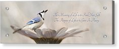 The Meaning Of Life Acrylic Print by Lori Deiter