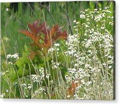 The Mighty Tiny Oak Amidst White Flowers Acrylic Print by Debbie Nester