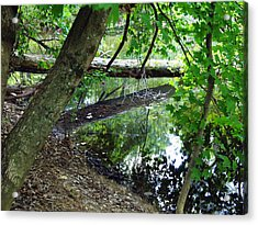 Acrylic Print featuring the photograph The Mirrored Tree by Deborah Fay