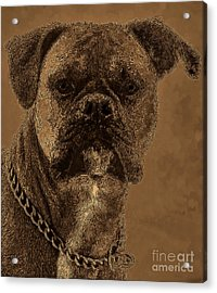 The Modern Boxer Bulldog Acrylic Print by Lesa Fine