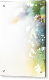 The Modern Grape 3 Acrylic Print by Clint Brewer