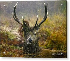 Stag Party The Series The Morning After Acrylic Print