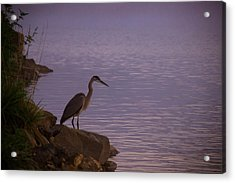 The Morning Hunt Acrylic Print
