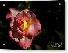 The Morning Rose Acrylic Print