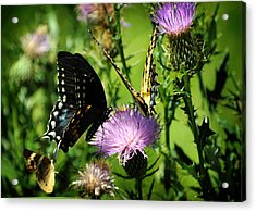 The Nectar Seekers Acrylic Print