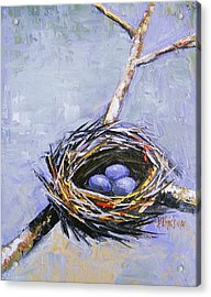 The Nest Acrylic Print by Brandi  Hickman