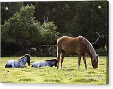 The New Forest  Acrylic Print by Angel  Tarantella