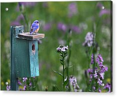 The New Landlord Acrylic Print by Lori Deiter
