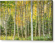 Acrylic Print featuring the photograph The North Woods by Wanda Krack