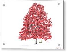 The Oak Tree Acrylic Print by David Simons