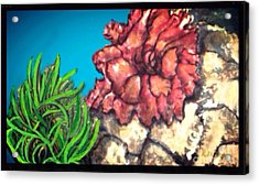 Acrylic Print featuring the painting The Odd Couple Two Very Different Sea Anemones Cohabitat by Kimberlee Baxter
