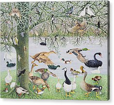 The Odd Duck Acrylic On Canvas Acrylic Print by Pat Scott