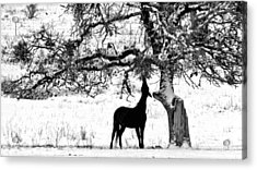 Acrylic Print featuring the photograph The Ojbective by Julia Hassett