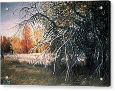 The Old Apple Tree Acrylic Print
