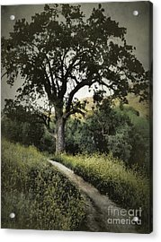 The Old Chumash Trail Acrylic Print