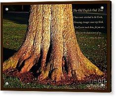 The Old English Oak Tree Acrylic Print