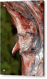 The Old Man In The Tree Acrylic Print