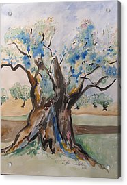 The Old Olive Tree Acrylic Print by Esther Newman-Cohen