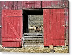 The Old Sheep Barn Acrylic Print by Olivier Le Queinec
