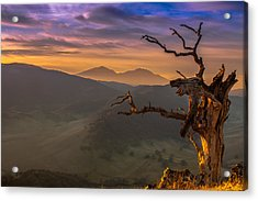 The Old Tree And Diablo Acrylic Print by Marc Crumpler