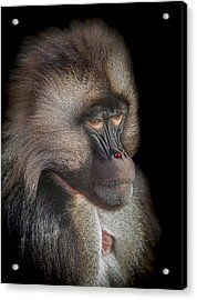 The Old Warrior Acrylic Print by Paul Neville